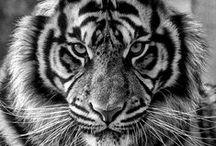 Tiere/ Animals