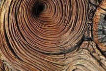 Arvores-Trees