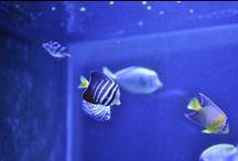 Bespoke, through-wall marine aquarium / Aquatic Gems Ltd designed and installed this stunning bespoke, through-wall marine aquarium in a North London living room.   See more of our bespoke aquarium installations: www.aquaticgems.co.uk