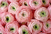 Flowers.....