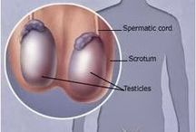 Testicular Cancer / links to information on Testicular Cancer / by Utah Cancer Control Program (UCCP)