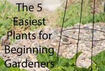 Organic Gardening / Research and inspiration for my organic raised bed garden