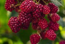 # Fruits # Frutas e sucos / Frutas de diversas e os refrescos que podem ser feitos com elas. / by Luci Busnardo 1