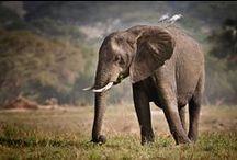 Mundo Animal / Animais e Bichos de estimação.