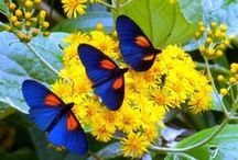 Beautiful butterflies and moths / Beautiful Nature