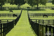 Country life / barn