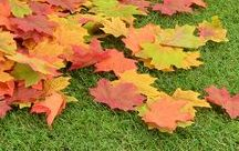 Autumn Props 2016 / Create fantastic autumnal displays with our autumn, harvest and woodland themed props. We've added many new products this year, from artificial leaves and toadstools to forest animals and replica pumpkins.