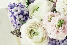 Kytice, květy, kytky, rostliny / Kytky