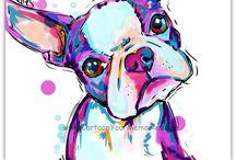 Chuleta / Boston terrier