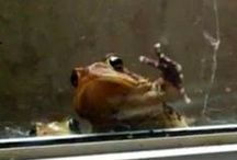Frogs on the Windowsill / Who'd have guessed  that the scaly little guys were such positive harbingers of  a healthy environment?