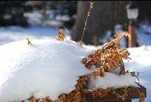 Winter Interest in the Garden / Winter interest, the best excuse a gardener never had.