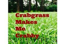 Crabgrass Makes Me Crabby / What's up with crabgrass this year?  Is the lawn yet another victim of global warming?  Is climate change causing crabgrass to take over the yard?