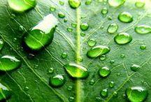 Verde Smeraldo / Smeraldo: l'energia di colore verde rende lo smeraldo la pietra del successo e dell'abbondanza. Ha molte eccellenti qualità ed è solitamente collegata ai nati nel mese di maggio. È comunemente usata negli anelli di fidanzamento, in quanto presenta forti vibrazioni amorevoli.