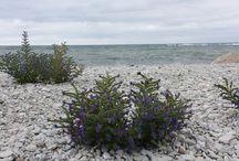 Gotland / Vackraste ön - paradiset på jorden