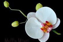 fiori di mais