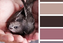 AW'12 Inspiration / A selection of inspiring images to show the colour trends of A/W '12 Interiors