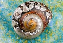 Sea shells / How I love the color of the sea
