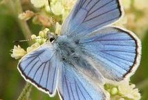 Butterflies and Dragonflies / The most amazing creatures of nature