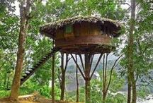 Tree huts with flair