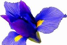 Gifs Contains / Gifs Animados - Imagens que se mexem http://amalotus.tumblr.com/