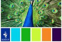Сочетание Цвета Палетты Color Palette