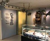 Fish shop Køge, Køge (DE)