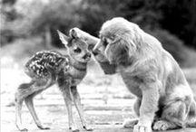 │creature │ / mammals, reptiles, amphibians, marsupials etc. / by christine