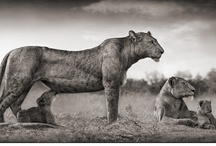 Nick Brandt - Photography