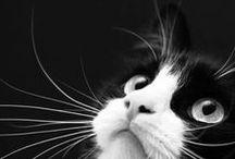 """""""u dvou koček"""" / nápady"""