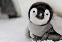 Adorable / I just love these adorable photos of these animals, kids and people.  Love is a beautiful thing! / by Connie Ohm
