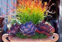 jardin y naturaleza / Las flores de mi jardín han de ser mis enfermeras....(Violeta Parra)