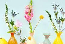 f l o w e r s  .  p l a n t s / beautiful flowers & plants