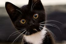 Chatooons / Parce que les chats, ce ne sont pas que des animaux.. ce sont avant tout des CHATS ♡♡♡
