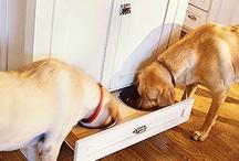 Home Organization - Pets / by Rebecca Jones-Gebers