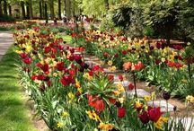 Tulpen en meer