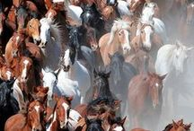 ♥Horses - that's all♥ / I love this beautiful and majestic animals!