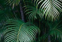 ❁ Tuinplanten
