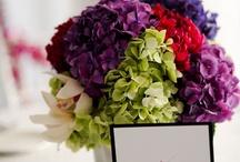 Hydrangeas / favorite flowers.