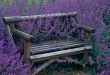 Benches/Seating / by Julie Bozarth