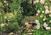 Garten - Garden