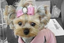 **Cute Dogs** / Well actually my Cody is the cutest!!