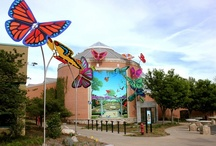 Large-Scale Exterior Butterfly Art