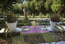 L'orto / ..erbe aromatiche, fichi d'india, ulivi, gerani, ortensie e buganville...