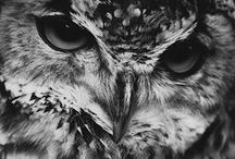 Owlowls