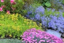 Ground Cover Plants / by Dorothy S