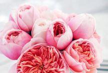 flower / 素敵なアレンジメント