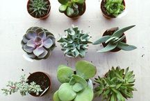 Exterior & Plants
