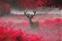 Nature / Nature Photography