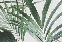 - Green Insp -