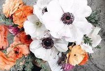 - Beautiful Flowers -